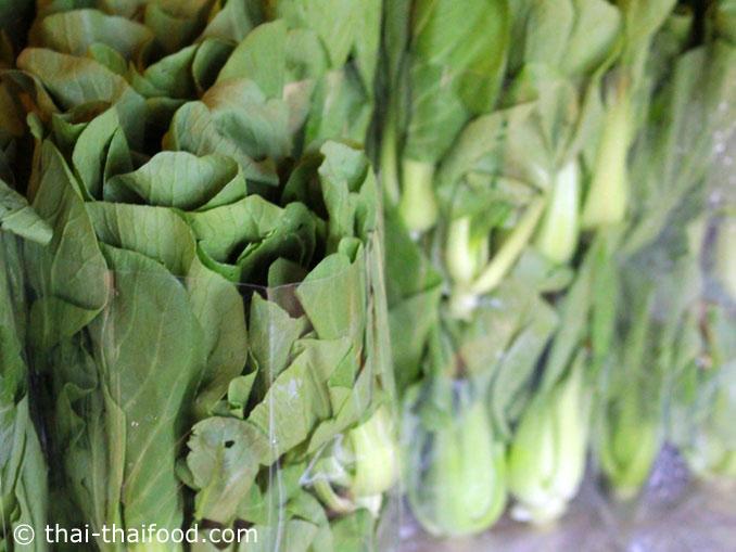 ผักกวางตุ้งไต้หวัน