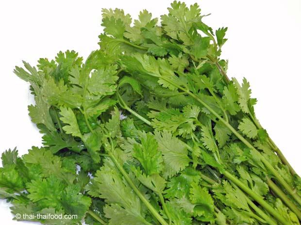ใบผักชี