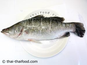 ปลากระพงขอดเกล็ดออกผ่าท้องทาเกลือป่น