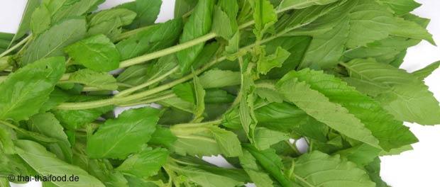 กะเพรา (Holy basil) เป็นพืชสมุนไพร