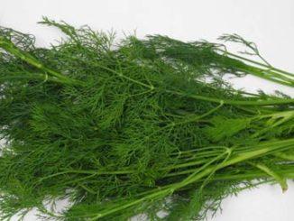 ผักชีลาว (Dill) เป็นพืชสมุนไพร และเป็นเครื่องเทศชนิดหนึ่ง
