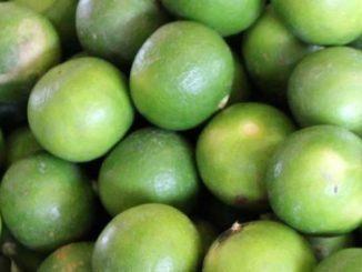ผลมะนาว