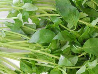แมงลัก (Lemon basil)เป็นพืชสมุนไพร