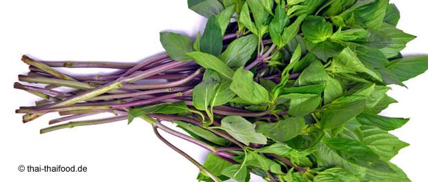 โหระพา (Sweet Basil) เป็นพืชสมุนไพร