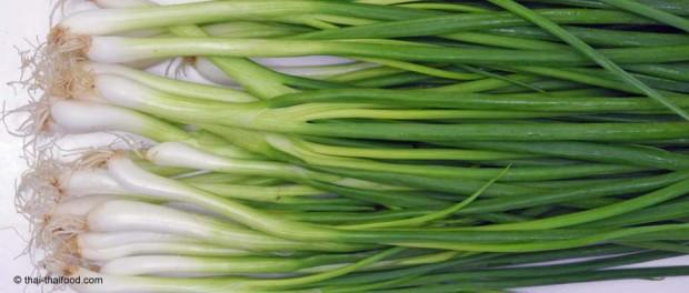 ต้นหอม (Spring Onion หรือ Green Shallot) เป็นพืชสมุนไพรไทย