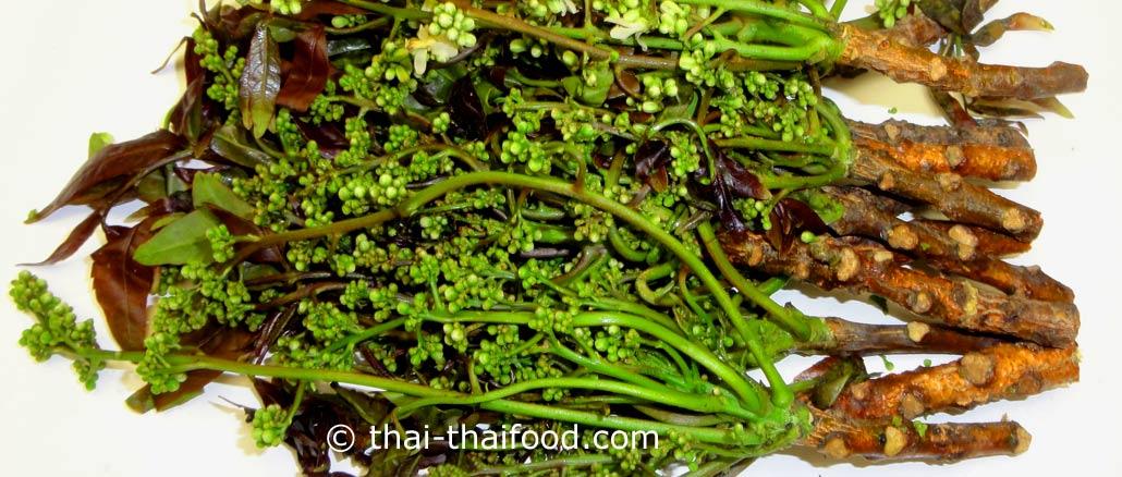สะเดา (neem) เป็นพืชผักสมุนไพรพื้นบ้าน