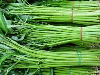 ผักบุ้งจีน-water convolvulus เป็นพืชผักสมุนไพรใบเขียว ที่อยู่ในวงศ์ผักบุ้ง