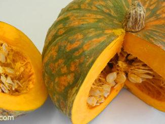 ฟักทอง (Pumpkin) เป็นพืชล้มลุก มีอายุสั้น ลำต้นเป็นไม้เถาเลื้อย