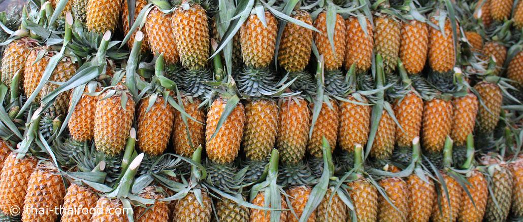 สับปะรด (Pineapple) เป็นพืชล้มลุก ลำต้นเดี่ยวอยู่ใต้ดิน