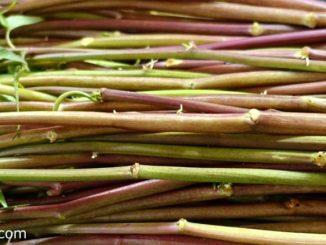 ผักบุ้งไทย เป็นพืชผักสมุนไพรใบเขียว เป็นพืชที่อยู่ในวงศ์ผักบุ้ง เป็นพันธุ์ผักบุ้งดั้งเดิมของไทย