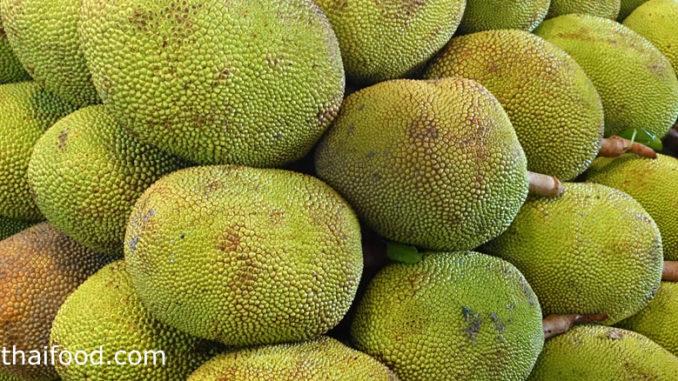 ขนุน-jackfruit พืชผักสมุนไพร เป็นผลไม้พื้นบ้าน เป็นไม้ยืนต้นขนาดใหญ่ เปลือกมีหนาม มีกลิ่นหอม