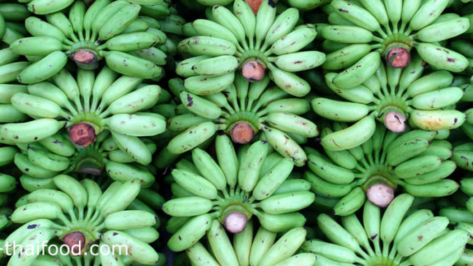กล้วยไข่ (Lady Finger Banana) เป็นพืชตระกูลกล้วยชนิดหนึ่ง