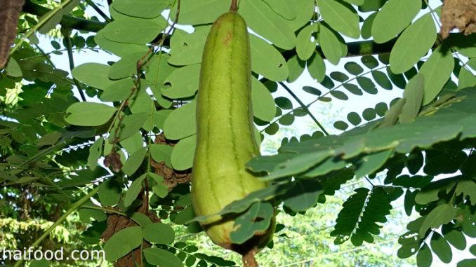 บวบหอม (Sponge Gourd) เป็นบวบชนิดหนึ่ง ผลทรงกระบอกกลมเรียวยาว มีสีเขียว มีลายเส้นสีเขียวเข้มตามยาว