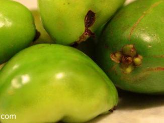 มะดัน (Madan) ผลกลมรีปลายแหลม ผิวเปลือกบางเรียบเป็นมัน ผลมีสีเขียว เนื้อนุ่มฉ่ำน้ำ มีรสชาติเปรี้ยวมาก