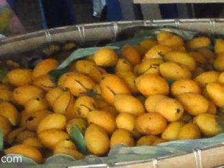 มะปราง (Marian Plum) เป็นผลไม้มีลักษณะคล้ายกับมะยงชิด ผลทรงไข่กลมรี