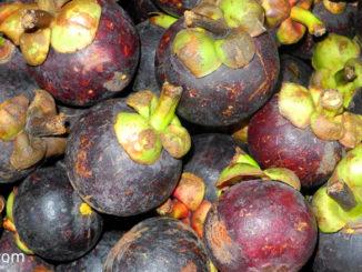 มังคุด (Mangosteen) เป็นราชินีผลไม้