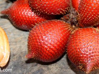 ระกำ (Salacca) เป็นพืชตระกูลปาล์ม เป็นผลไม้ชนิดเดียวกันกับสละ
