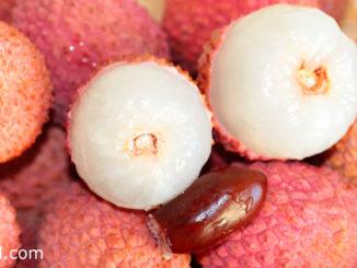 ลิ้นจี่ (Lychee) ผลมีทรงกลม ทรงรี หรือรูปหัวใจตามสายพันธุ์ ผิวเปลือกขรุขระสีแดง เนื้อนุ่มฉ่ำน้ำมีสีขาวขุ่น รสชาติหวานฉ่ำหรือหวานอมเปรี้ยว มีกลิ่นหอม