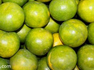 ส้มเขียวหวาน (Mandarin Orange) เป็นพืชตระกูลส้มชนิดหนึ่ง มีหลายสายพันธุ์