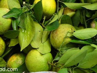 ส้มเช้ง (Acidless Orange) พืชตระกูลส้มชนิดหนึ่ง มีถิ่นกำเนิดในจีน