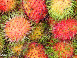 เงาะ (Rambutan) ผลทรงกลมรี เปลือกหนาสีแดง มีขนยาวสีแดงปกคลุมทั่วผล มีเนื้อนุ่มฉ่ำน้ำสีขาวใส รสชาติหวานกรอบ หรือหวานอมเปรี้ยว มีกลิ่นหอม