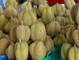 ทุเรียน (Durian) เป็นผลไม้ชนิดหนึ่ง มีกลิ่นหอมเฉพาะตัว