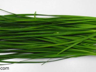 กุยช่าย (Chinese Chive) อยู่วงค์เดียวกับหอมกระเทียม มีเหง้าอยู่ใต้ดิน มีเหง้าเล็กและแตกกอ ลำต้นจะถูกห่อหุ้ม ไปด้วยกาบใบโดยรอบๆสีเขียว ใบคล้ายใบกระเทียม