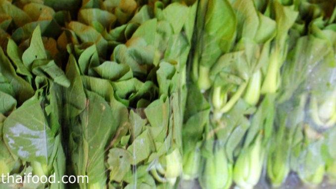 ผักกวางตุ้งไต้หวัน (Pak Choi) มีโคนก้านใหญ่ปลายเรียว ก้านใบหนาและอวบน้ำ ออกเรียงสลับโดยรอบๆ ปกคลุมที่ฐานลำต้นสีเขียวอ่อน ใบมีสีเขียว ดอกเป็นช่อมีสีเหลืองสด