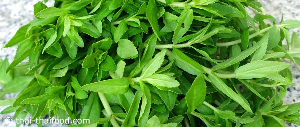ผักแขยง (Rice Paddy Herb) เป็นพืชผักสมุนไพร ที่เป็นที่รู้จักกันดี เป็นผักพื้นบ้านของอีสาน