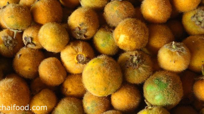 มะอึก (Hairy Fruited Eggplant) ลำต้นมีขนนุ่มๆสีน้ำตาลอ่อนปกคลุม เป็นผลทรงกลม ผิวเปลือกมีขนนุ่มหนาแน่นทั่วผล ผลดิบมีสีเขียว เนื้อเหนียวฉ่ำน้ำ มีรสชาติขื่นเฝื่อน ผลสุกจะมีสีเหลือง มีรสชาติเปรี้ยว