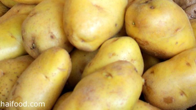 มันฝรั่ง (Potato) มีหัวอยู่ใต้ดิน ออกมาจากไหลของต้นจริง หัวมีทรงกลมรี มีขนาดเล็กหรือขนาดใหญ่ ตามสายพันธุ์ มีเปลือกบางเรียบ มีสีน้ำตาลหรือสีม่วง