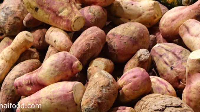 มันเทศ (Sweet Potato) เป็นพืชล้มลุกไม้เถาเลื้อย มีรากที่สะสมอาหาร แล้วขยายตัวออกเป็นหัวอยู่ใต้ดิน มีรสชาติหวานมัน