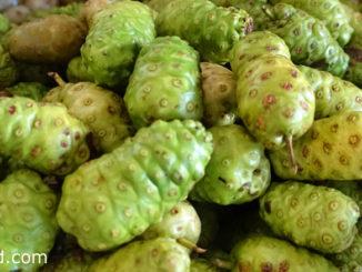 ยอ (Noni) ผลทรงกลมเรียวยาว ผิวเปลือกขรุขระเป็นตุ่ม ผลดิบมีสีเขียว ผลสุกมีสีขาวนวล มีรสชาติเผ็ด มีเมล็ดแบนรีเล็กๆ อยู่ข้างในเนื้อจำนวนมาก ผลสุกมีกลิ่นแรง