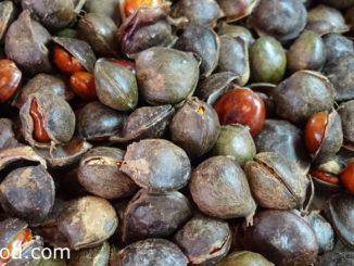 ลูกเนียง (Djenkol Bean) ต้นไม้พื้นบ้านภาคใต้ของไทย ผลเป็นฝักแบนเป็นเกลียวไปทางเดียวกัน มีเมล็ดอยู่ข้างในฝัก ทรงกลมป้อมคล้ายเมล็ดถั่วสองซีกประกบกัน รสชาติฝาดมันกรอบ มีกลิ่นฉุนแรง