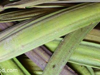 เพกา (Broken Bones Tree) เป็นพืชผักสมุนไพร เป็นไม้ยืนต้น มีผลเป็นฝัก มีลักษณะรูปดาบแบนยาว ปลายฝักแหลม ฝักอ่อนมีสีเขียว มีรสชาติขม