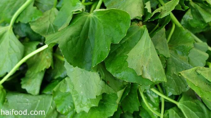 ใบบัวบก (Gotu Kola) เป็นพืชผักสมุนไพร ใบกลมเล็กๆคล้ายใบบัว มีสีเขียว รสชาติหวานขม มีกลิ่นฉุนเฉพาะตัว