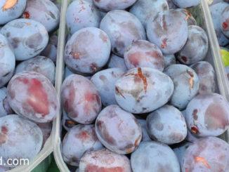 พลัม (Plum) ผลมีรูปไข่ ทรงกลมรี ผิวเปลือกเรียบ มีนวลสีขาวทั่วผล ผลสุกสีม่วงอมดำ สีแดงเข้ม สีม่วงเข้ม สีเหลือง สีส้ม มีเนื้อสีเหลือง ตามสายพันธุ์ เนื้อนุ่มฉ่ำน้ำ รสชาติหวานหรือหวานอมเปรี้ยว