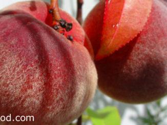 ลูกท้อ (Peach) ผลทรงกลม ผิวเปลือกมีขนนุ่มทั่วผล มีร่องกลางผลตามยาว ผลสุกสีเหลืองอมส้ม สีแดงอมชมพู ตามสายพันธุ์ เนื้อแน่นฉ่ำน้ำ รสชาติหวานกรอบ หรือหวานอมเปรี้ยว มีกลิ่นหอม