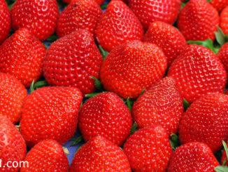 สตรอว์เบอร์รี (Strawberry) ผลมีทรงกลมรีตรงขั้วมีกลีบเลี้ยงสีเขียว เปลือกมีเมล็ดเล็กๆเกาะอยู่ มีเสี้ยนเล็กๆบางๆอยู่ทั่วผล ผลสุกสีแดงหรือสีแดงอมส้ม เนื้อนุ่มฉ่ำน้ำรสชาติเปรี้ยวหรือหวาน ตามสายพันธุ์