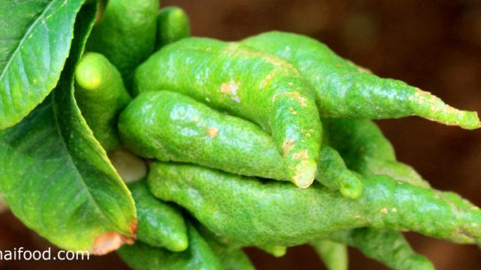 ส้มโอมือ (Som-O-Mue) ผลมีทรงรี ปลายผลแยกออกเป็นแฉกคล้ายนิ้วมือ หรือหนวดปลาหมึก ผลสุกสีเหลืองอมส้ม สีเหลือง ภายในผลจะมีสีขาวหนาคล้ายฟองน้ำ ไม่มีเนื้อผลและเมล็ด