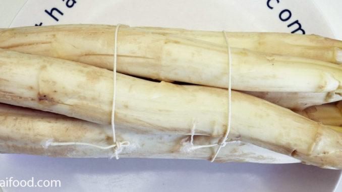 หน่อไม้ฝรั่งสีขาว(White Asparagus)ออกหน่อใต้ดิน มีเหง้าเล็กๆใต้ดินแตกกอ มีทรงกลมยาวเป็นแท่งอวบ มีใบเป็นเกล็ดบางๆตามข้อ มีสีขาว มีรสชาติหวานกรอบ มีกลิ่นเฉพาะตัว