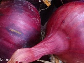 หอมหัวใหญ่สีแดง (Red Onion) เป็นหอมหัวใหญ่ชนิดหนึ่ง มีหัวอยู่ใต้ดิน หัวมีทรงกลมแป้น หรือทรงกลมรี หัวแก่มีเปลือกด้านนอกแห้งมีสีแดงอมม่วง มีกลิ่นฉุน รสชาติเผ็ดร้อน