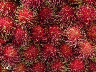 เงาะสีชมพู (Pink Rambutan) ผลทรงกลมรี เปลือกมีสีแดง มีขนยาวสีแดง หรือสีชมพูสด ปกคลุมทั่วผล เปลือกหนาแกะออกง่าย เนื้อนุ่มฉ่ำน้ำ สีขาวใส รสชาติหวานกรอบหอม มีเมล็ดอยู่ข้างในเนื้อ เนื้อร่อนเมล็ด หรือเนื้อติดเมล็ดแน่น ตามสายพันธุ์