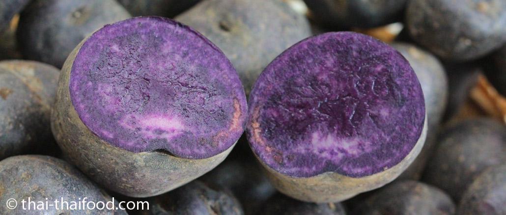 ►มันฝรั่งสีม่วง (Purple Majesty Potato) เป็นพืชล้มลุกขนาดเล็ก มีทรงพุ่ม มีหัวอยู่ใต้ดิน ออกมาจากไหลของต้นจริง หัวมีลักษณะทรงกลมรี มีตาอยู่รอบๆหัว จะเก็บสะสมอาหาร แล้วขยายตัวออกเป็นหัวอยู่ใต้ดิน มีขนาดเล็กหรือขนาดใหญ่ ตามสายพันธุ์ มีเปลือกบางเรียบ มีสีม่วงเข้ม มีเนื้อข้างในสีม่วง มีเนื้อแน่นฉ่ำน้ำ มีรสชาติกรอบมัน